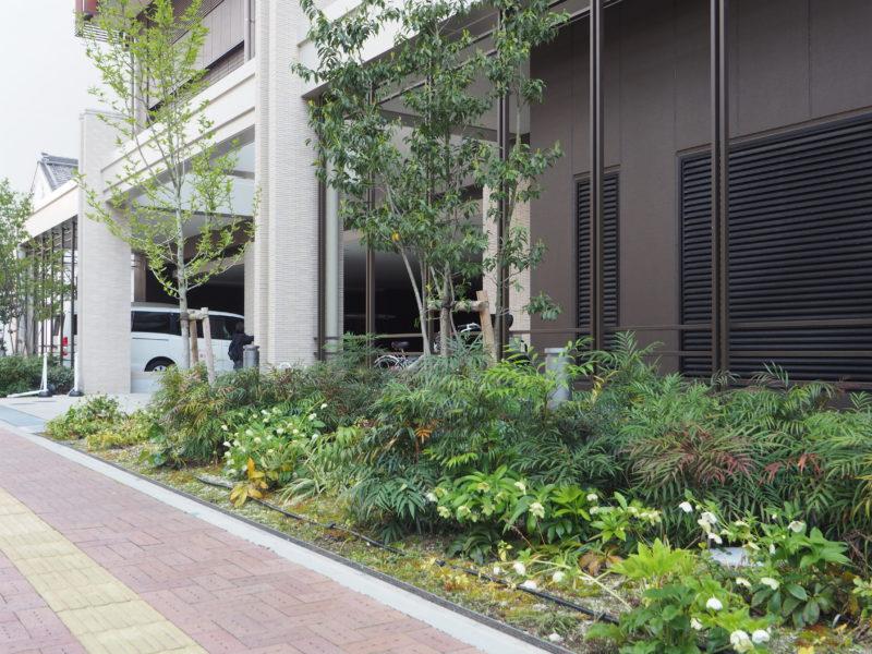 大型商業施設 植栽